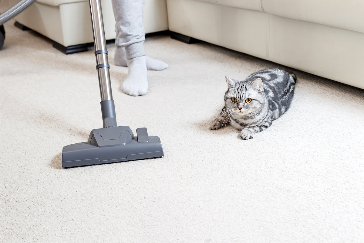 How to Clean Pet Odor from Carpet