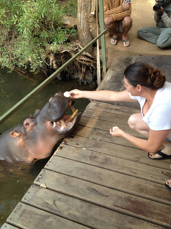 Doctor Erica feeding potatoes to a baby hippo on a dock