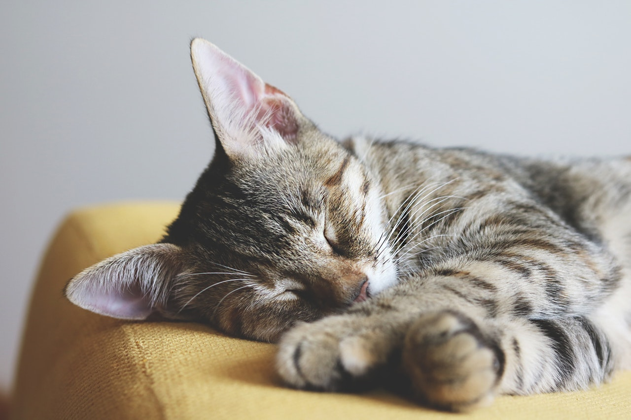 Dealing with Ear Mites in Cats in Broward & Palm Beach