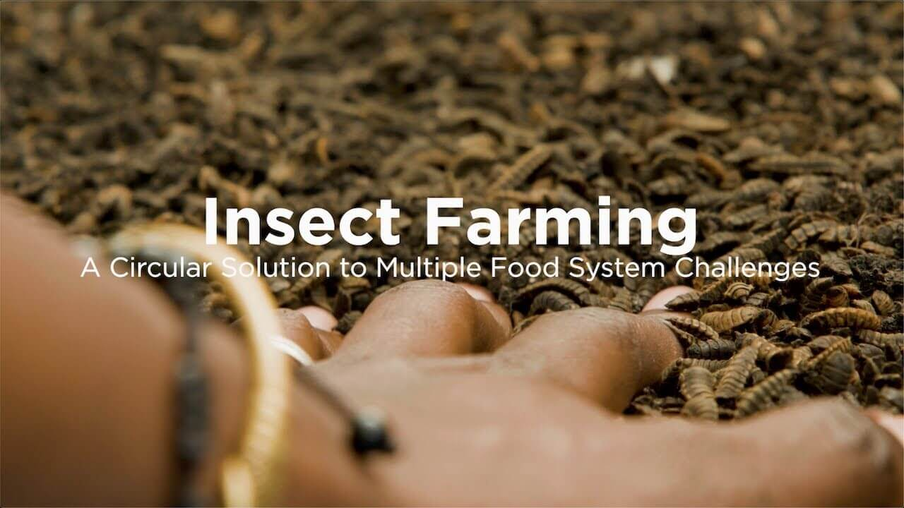 The role of insects in a circular economy for food