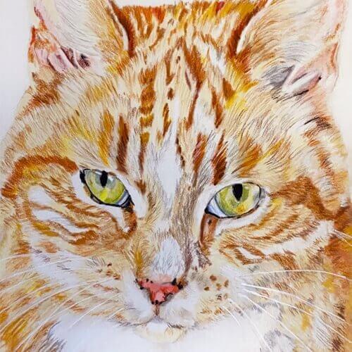 Rode kat in pastel