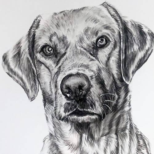 Hond in houtskool