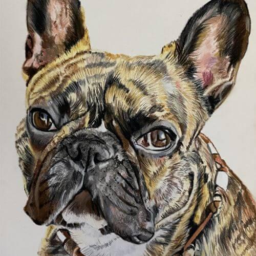 Pasteltekening Franse Bulldog