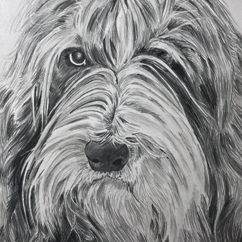 Hond Kyra grafiettekening A5