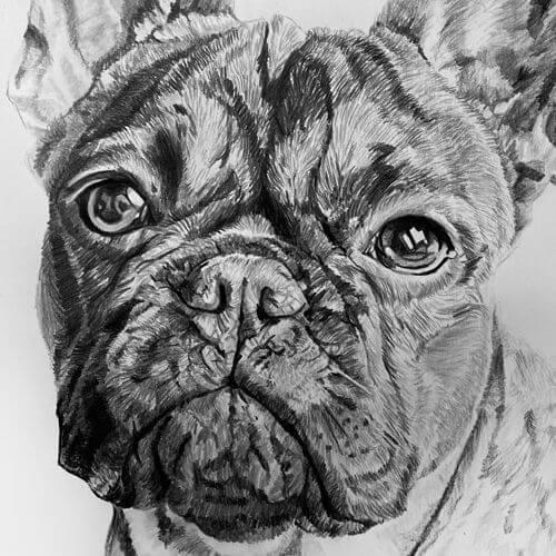Franse bulldog Milo grafiettekening A4