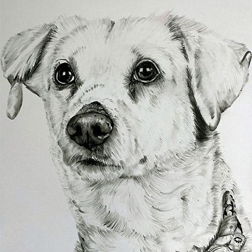 Witte hond houtskooltekening A4