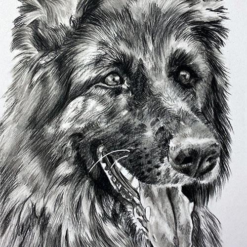 Vrolijke herdershond houtskooltekening