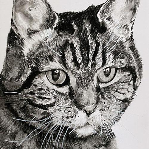 Mooie kat houtskooltekening A4