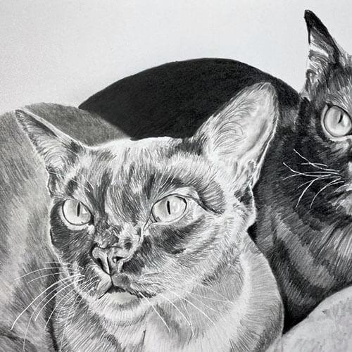 Twee mooie katten grafiettekening A4