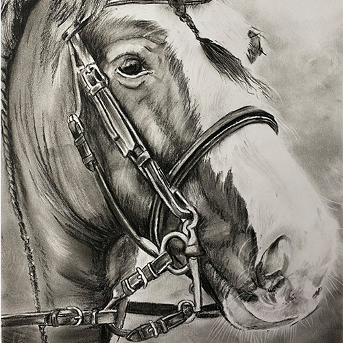 Houtskooltekening Paard A4