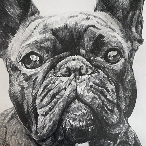 Franse bulldog Puck grafiet tekening A4