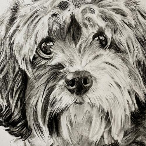 Schattig hondje houtskooltekening A4