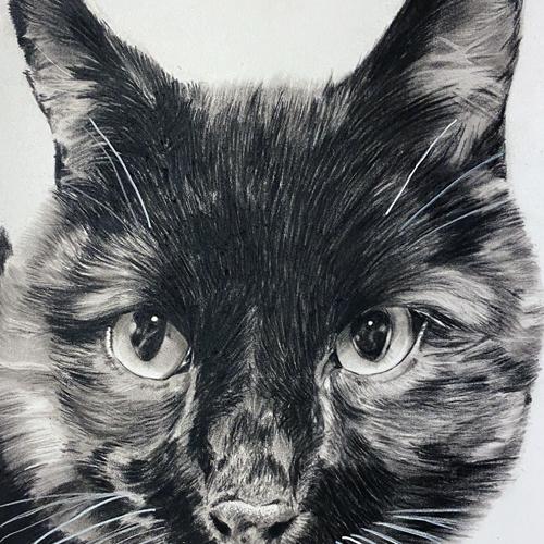 Houtskooltekening zwarte kat A4