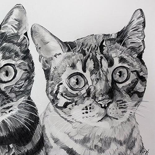 Bengaalse katten grafiet tekening A4