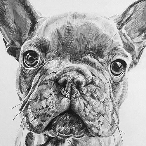 "Franse bulldog ""Toto"" Gordon Heuckeroth grafiet tekening"