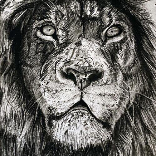 Houtskooltekening leeuw A4