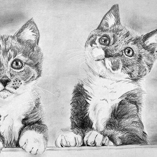 Kittens grafiet kattentekening A4