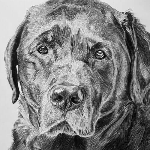 Labrador Max hondentekening A4