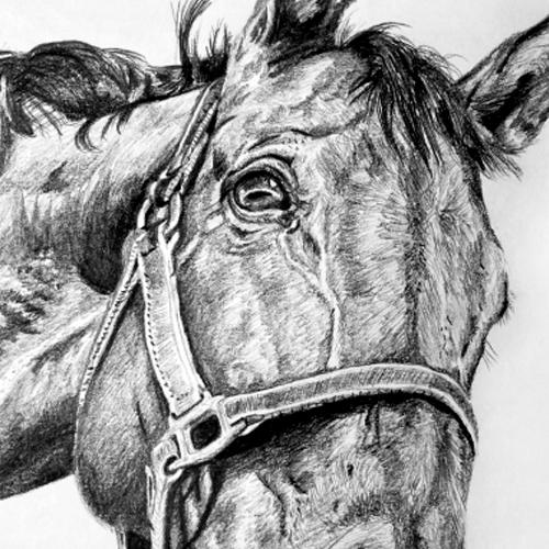 Paarden tekening grafiet A4