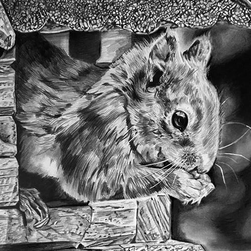 Eekhoorn tekening grafiet A4