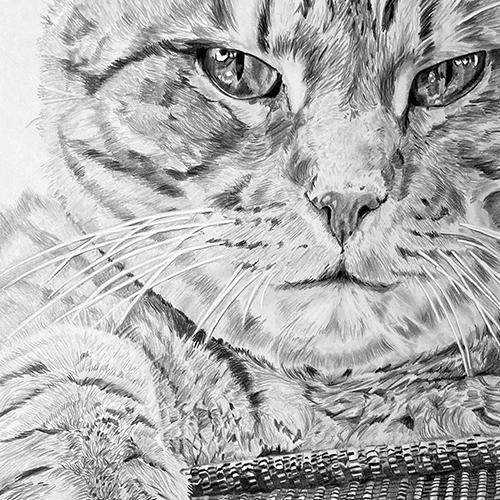 Kat Tinto grafiettekening A4
