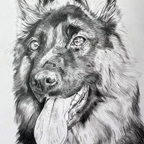 Duitse herdershond grafiettekening A4