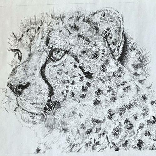Cheetah grafiettekening A4