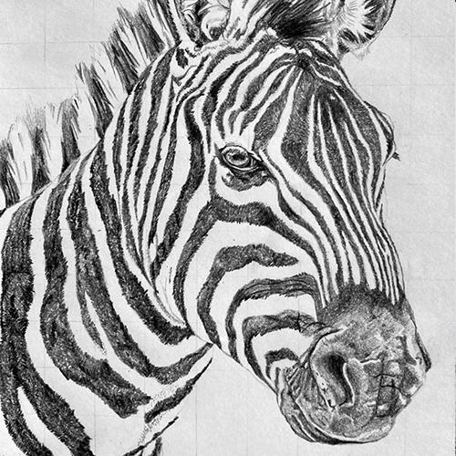 Zebra grafiettekening A4