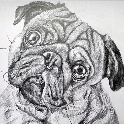 Pug tekening grafiet A4