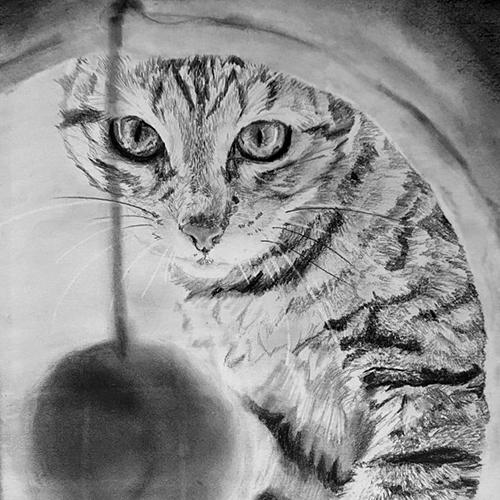 Kat in krabpaal tekening A4