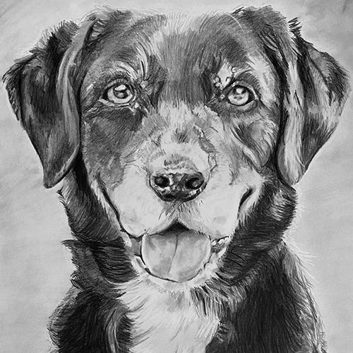 Hond Nova tekening A4