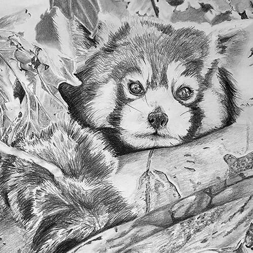 Rode panda in boom tekening