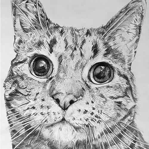 Kattentekening