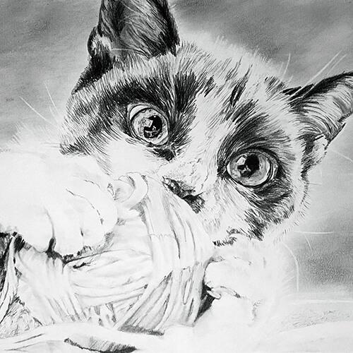 Kat met bolletje wol