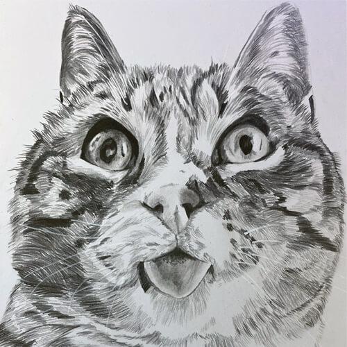 Kat met tong uit mond