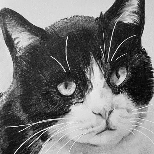 Kat Jeffrey in Houtskool op A5 formaat