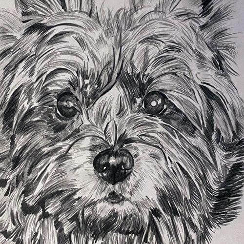 Portret tekening hondje A5