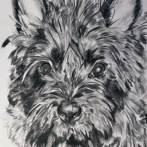 Portret tekening hondje A5 grafiet