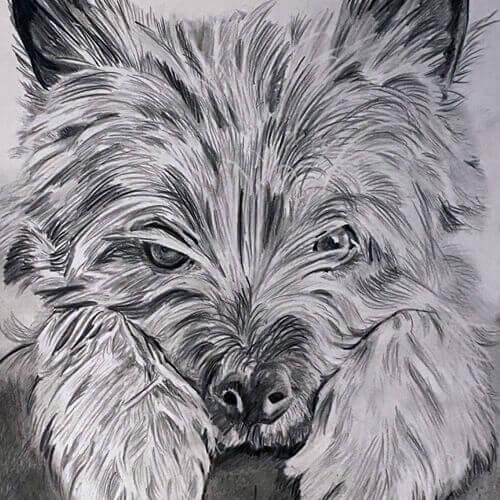 Hondentekening hondje op bank A5 grafiet