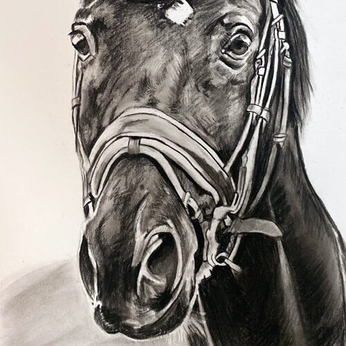 Houtskooltekening paard Cooper A4