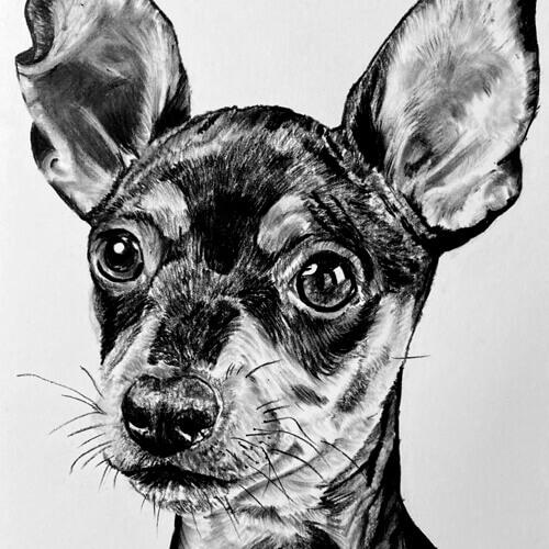 Houtskool tekening Dwergpinscher hondentekening A4