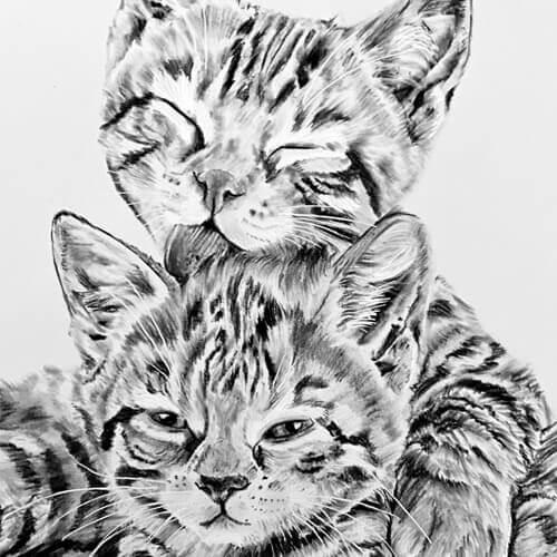 Kitteksn houtskooltekening kattentekening A4