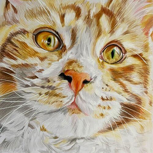 Kat Beru kattentekening in kleurpotlood A4