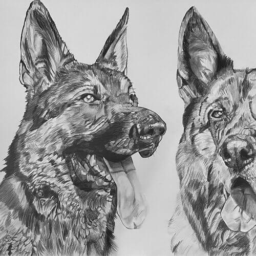 Twee herdershonden tekening A3 grafiet hondentekening