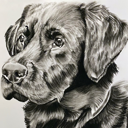 Hond Dop Houtskooltekening A4