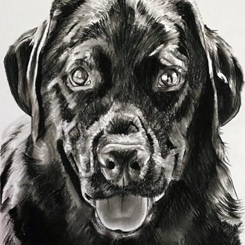 Hond Labrador houtskool A4 tekening