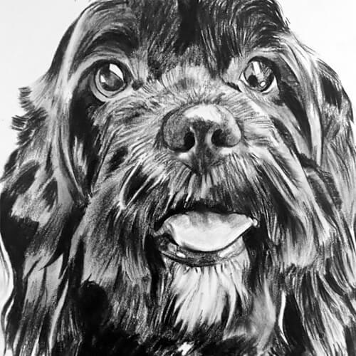 Schattig hondje A5 houtskool