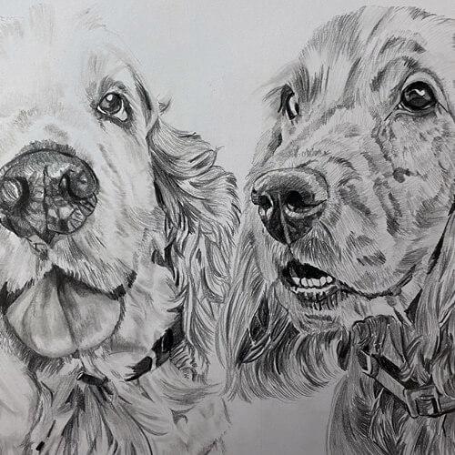 Twee hondenportret tekening A4 grafiet