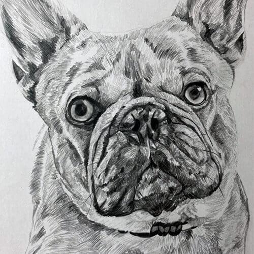 Franse bulldog A5 grafiettekening