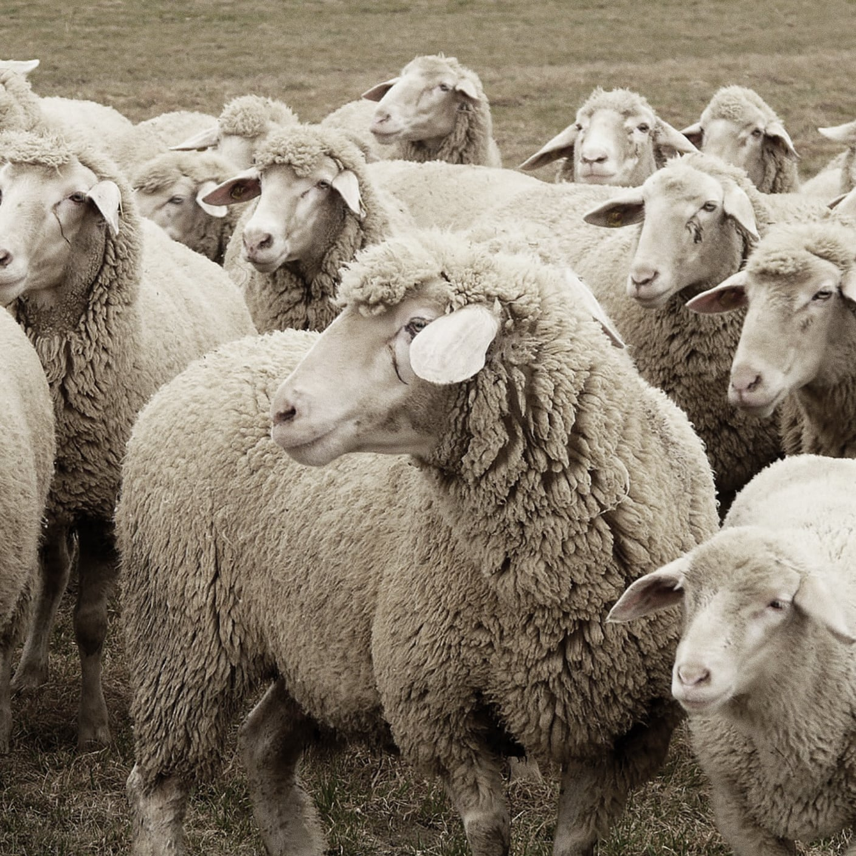 Photo of wool